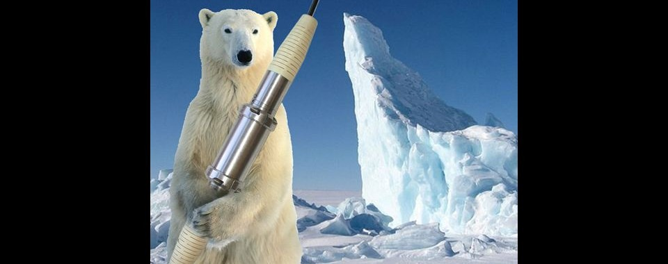 white-bear2